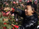 生态苹果,健康美味,好吃的苹果