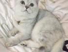 帮猫猫找个新家