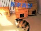 永顺宠物寄养 长期提供猫猫狗狗寄养服务 房间有暖气可接送