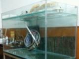 超低价处理大鱼缸