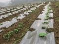 转让 蚬冈 土地 农场 养殖 种植 价格面议