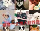 二十年专业繁育,大中小型精品宠物犬,现场检测包退换