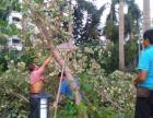 专业承接小区 公园 公路 庭院 修复 绿化 有苗圃
