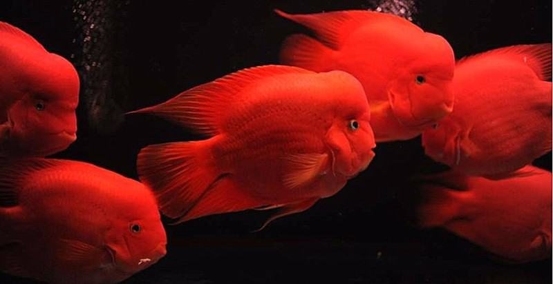 清洗鱼缸 水族之家 观赏鱼租摆 鱼缸定做搬运等