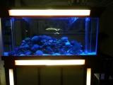 大型实木海水鱼缸