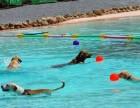 广州哪里有狗狗游泳的地方