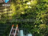 室內外綠植墻 植物墻花盆 墻體垂直綠化 自動循環澆灌墻體綠化
