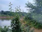 津市毛里湖湿地公园附近场地带住房鱼塘果树优价出售