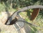 烟台开发区管道疏通 化粪池清理 专业可靠