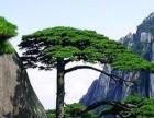 黄山线-安徽黄山、西递宏村、屯溪老街高铁往返四天之旅