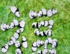 转发这群萌萌哒的熊猫,收下传祺送上的大写福字!