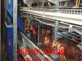 蛋鸡笼 中州肉鸡笼 放心服务好鸡笼