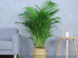 绿植租摆 绿植租赁 花卉租赁 办公室绿化 绿植销售