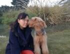 广州专业繁殖基地售顶级万能梗幼犬公母齐全可空运
