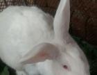 低价转让孩子玩的大白兔