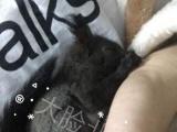 魔王松鼠奶鼠 各种兔子