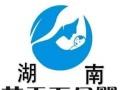 湖南长沙蓝天下母婴提供专业月嫂育婴师催乳等