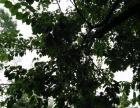 临夏——市外杏园出租
