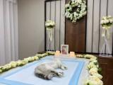 杭州宁波台州温州嘉兴金华,宠物去世火化殡葬24h营业