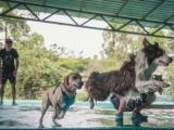 喜讯 喜讯 胖虎宠物酒店宠物游泳馆正式开业啦