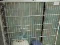 几乎全新猫笼子超大号
