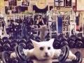 湖里教瑜伽最好健身房洛奇俱乐部优惠最后几天!!!