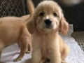 有缘犬舍提供宠物寄养,配种、训练、名犬出售等服务。
