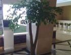 武汉绿植植物租摆,写字楼酒店,绿化墙设计施工及绿化施工