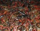武汉白沙洲龙虾批发