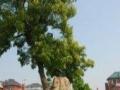 富阳新沙岛企业团体春游CS拓展马采摘烧烤皮划艇