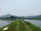 十六个标准优质水塘共二百亩养殖场出租转让。