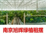 南京学校绿植租赁幼儿园宾馆别墅会所医院酒店盆景出租