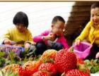 东莞周边哪里有绿色有机健康的农家乐一日游