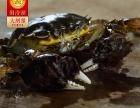 福州蟹状元大闸蟹的特色!