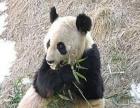 黄岛野生动物园-青岛野生动物园一日游