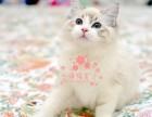 乌鲁木齐买卖宠物地方 乌鲁木齐哪里卖健康布偶猫价格便宜