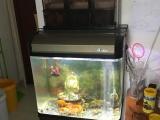 9成新的鱼缸和锦鲤鱼