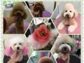 天宠阁宠物美容培训学校开始招生 一对一教学
