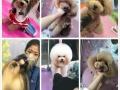 免费宠物美容SPA 来自夏社宠艺培训学校提供