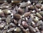 河南省嵩宇农业科技有限公司 羊肚菌室内种植