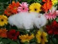 长宁区宠物火化宠物殡葬电话 天山路宠物殡葬接收点电话