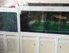 森森珍珠白鱼缸