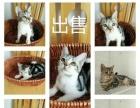 出售各种猫喜欢的请联系