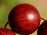 印度小叶紫檀2.0金星佛珠手串 同料顺纹带金星高油高密手链批发