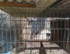 出售铁质动物笼