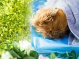 靜安區寵物火化 寵物殯葬 寵物善終服務 24小時上門接送