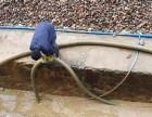 专修断水龙头 各种新旧房屋房顶漏水,厨房漏水,卫生间漏水