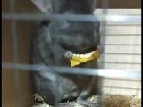 龙猫DD一枚 浅咖 8个月