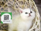 南通哪里有宠物店 南通哪里卖宠物猫便宜 南通蓝猫价格