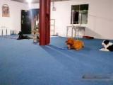 转让白云区麦架镇青山村青山组犬类培训基地面积大